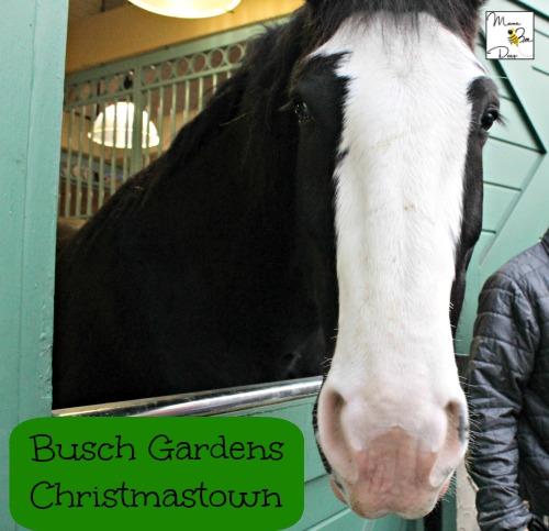 Christmas Town Busch Gardens Williamsburg