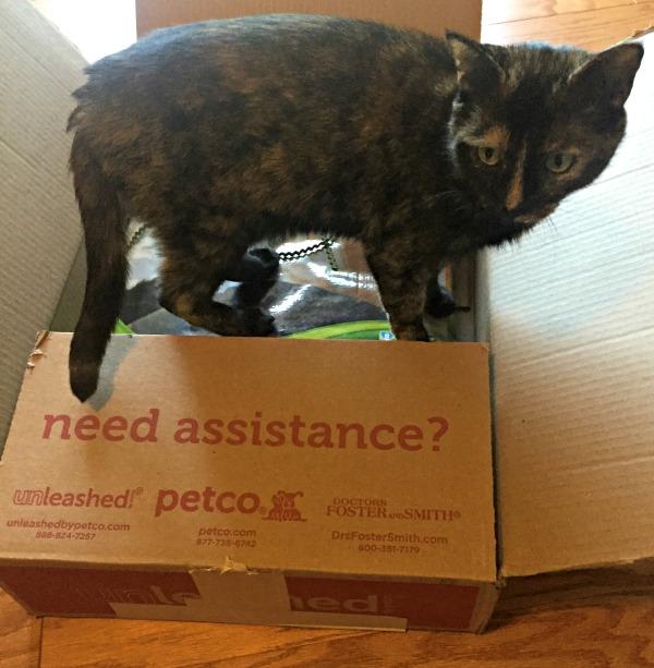 petco box